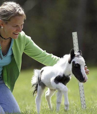 Лошадь Тамберлина