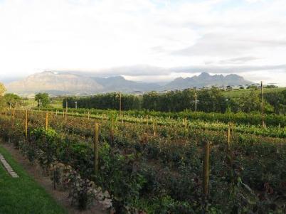 Стелленбос (Stellenbosch, Western Cape), Южная Африка