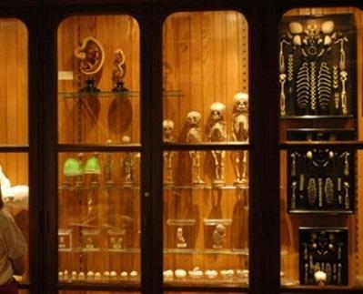 Музей медицинской истории Мюттера, Филадельфия